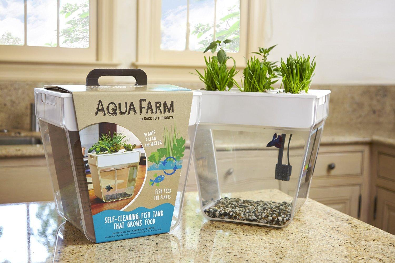 aqua farm akwarium