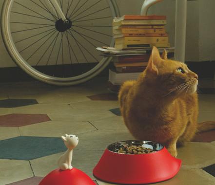miska dla kota z pokrywką i kotem mio