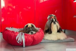 Dekoracyjne legowisko dla psa Daisy od Lauren Design