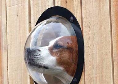 okno w płocie dla psa