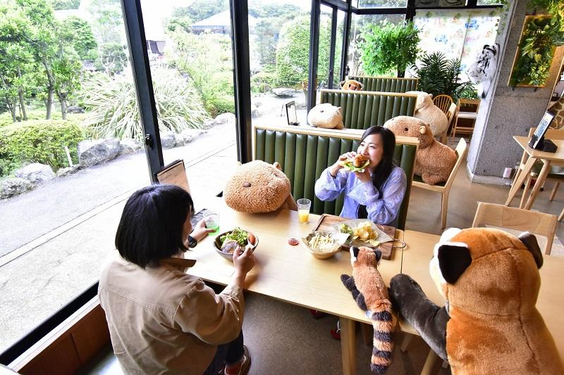 japonskie zoo kapibary dystans 2
