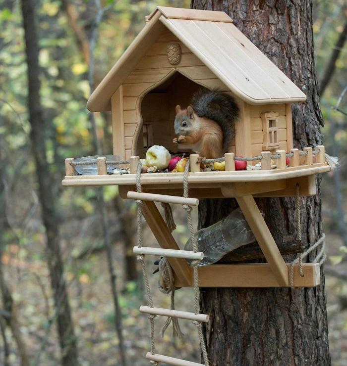 karmnik dla wiewiorki