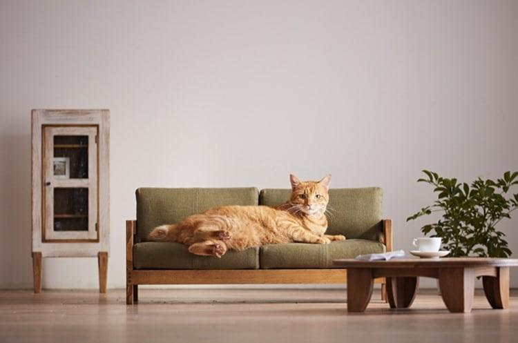 Miniaturowe meble wypoczynkowe dla kotów, prosto z Japonii
