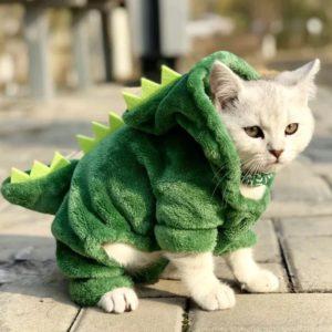 kot wdzianko