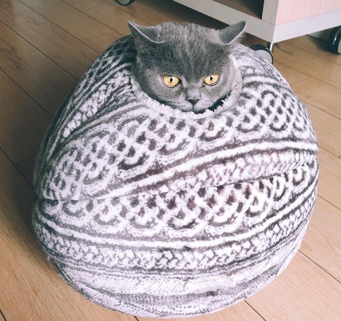 kula dla kota