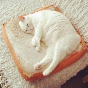 legowisko tost