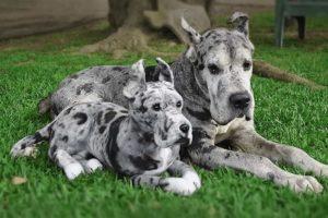 Maskotka klon twojego zwierzaka Cuddle Clones
