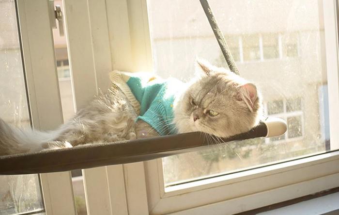 półka dla kota okno