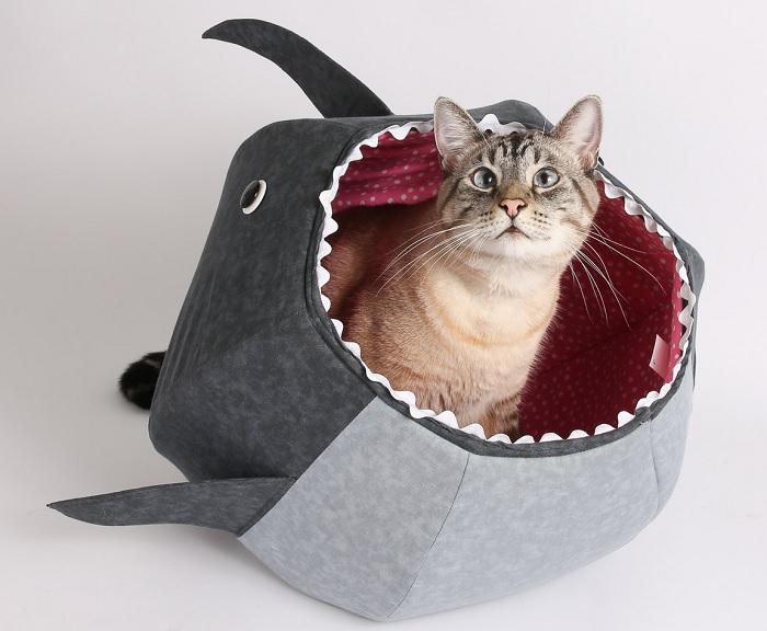 posłanie rekin