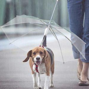 psia parasolka