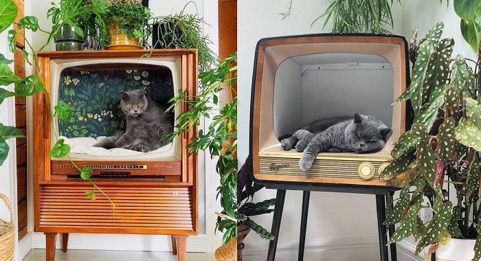 retro telewizor poslanie dla kota gadzety 2