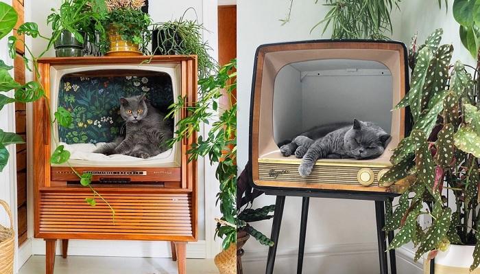 Ludzie zamieniają retro telewizory na stylowe posłania dla kotów