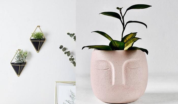 15+ prezentów dla wielbiciela roślin