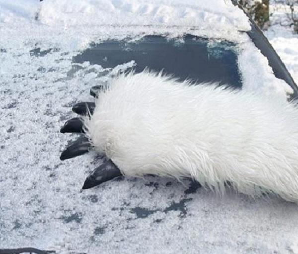 Skrobaczka do szyb łapa niedźwiedzia marki Fizz