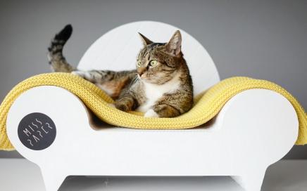 sofa dla kota misspaper