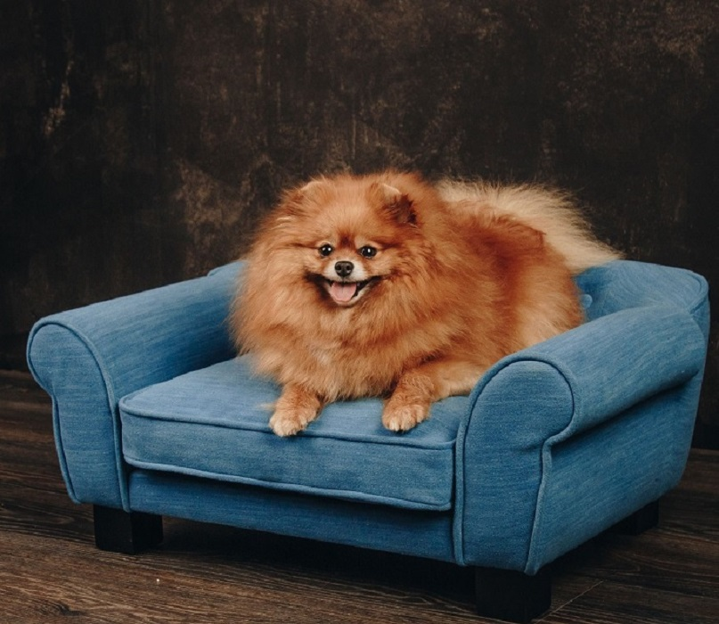 sofka dla psiaka