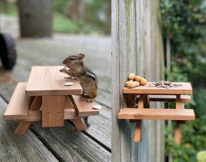 stolik piknikowy dla wiewiórki