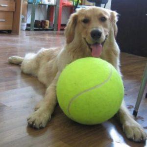 wielka piłka dla psa